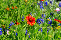 Texas Wildflowers and Missions 1480